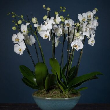 Orchids & Plants